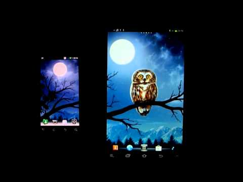 Video of Owl Landscape