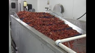 Crawfish season disappointing so far