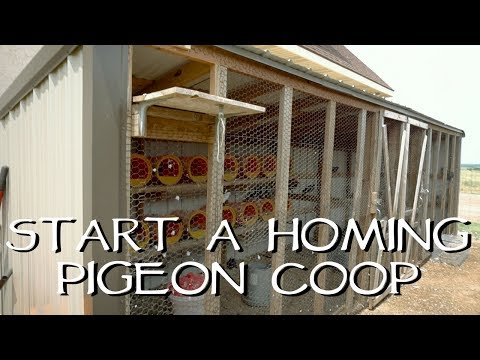 , title : 'How To Start Your Own Homing Pigeon Loft