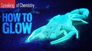 What's the Difference Between Fluorescence and Bioluminescence?