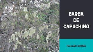 preview picture of video 'Barba de capuchino / Barba de caputxí'