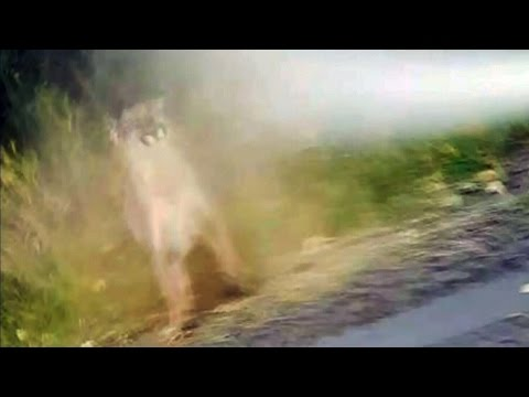 Caught on cam: Jogger stops cougar attack with bear spray