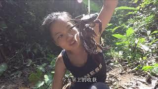 麻雀喳喳求生视频之挑战湄公河流域Sparrows fight for survival video challenges Mekong river basin