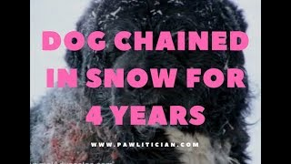 Dog Rescued Chained in Snow