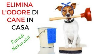 Eliminare l'odore di cane in casa: rimedi naturali fai da te anche odore di urina