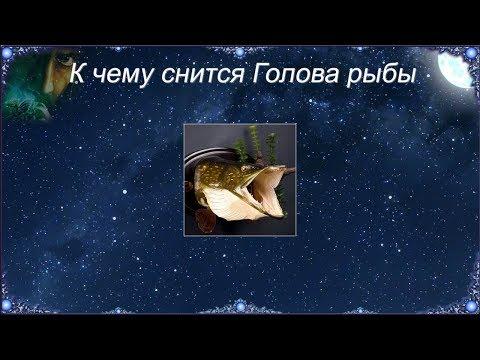 К чему снится Голова рыбы (Сонник)