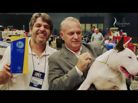 Tatanka Bulls 2020 - Presentation