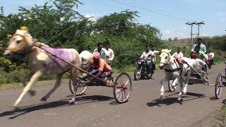 Horse Cart Race Tungal. Конная корзина. घोड्यांची शर्यत.