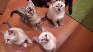 Feeding Foster Kittens Is Fun Noisy Work!