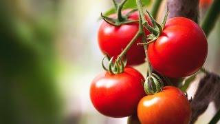 Πώς να διατηρήσεις φρέσκα φρούτα και λαχανικά - σειρά 2 Title
