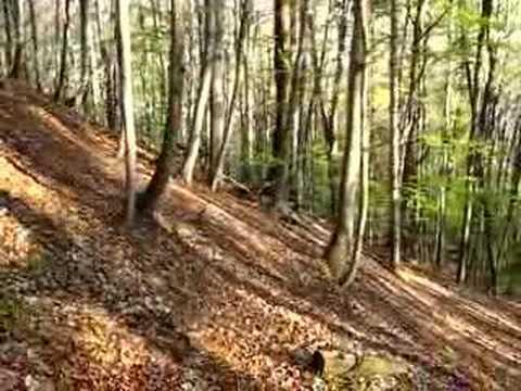 Leśny skoczek rowerowy