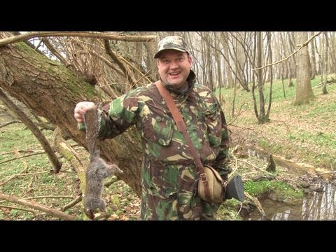 Hunting squirrels with a shotgun in Sussex
