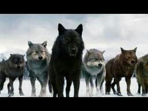 #Paws by Claws ep.6 #kristina kashytska #wolf toys