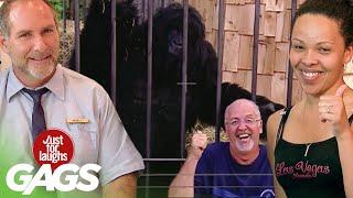 bromas  bromas de gorila