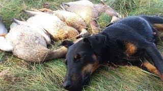 Отлична ОХОТА НА УТКУ. 3 охоты в 1 видосе !!! Duck Hunting 2018