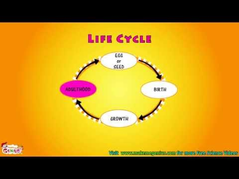 What is Life Cycle Video for kids