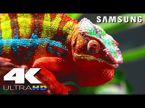 4K Ultra HD | SAMSUNG UHD Demo: Nature in 4K