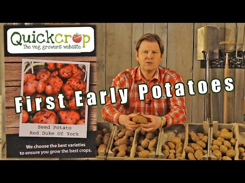 , title : 'Seed potatoes - first earlies