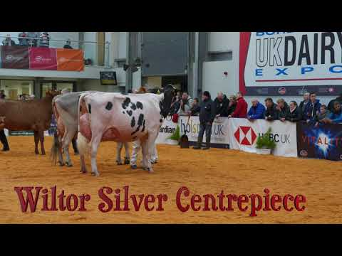 , title : '2020 UK Dairy Expo.Interbreed Champion of Champions.Winner -  Wiltor Silver Centrepiece