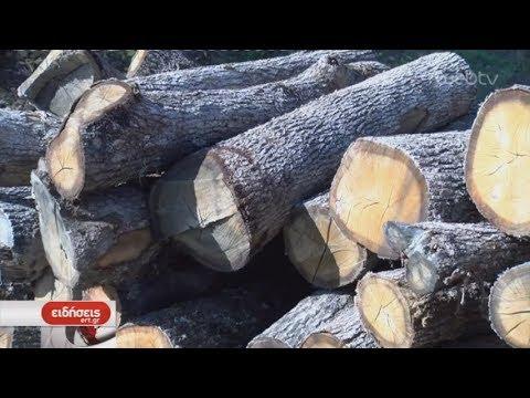 Επιδότηση καυσόξυλων στις ορεινές περιοχές | ΕΡΤ