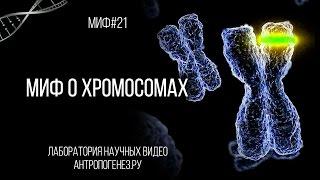 Александр Соколов. Миф о хромосомах