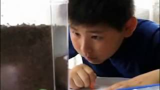 Elementary School Life in Japan - Summer Vacation