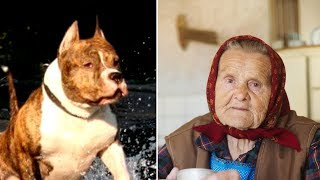 Бабушка подобрала питбуля на улице. Через некоторое время сосед услышал крик от её дома