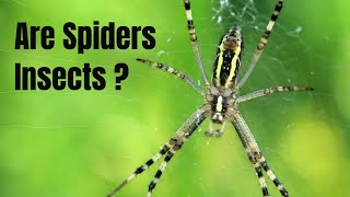 Why a spider is not an insect