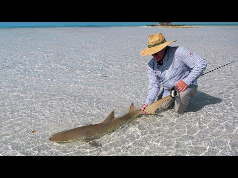 Hajer og bonefish på flue