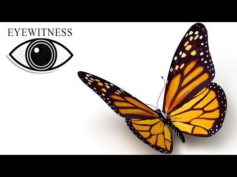Все Про Бабочек I BBC Документальный Фильм    Eyewitness   Butterfly