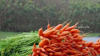 munnar the most beautiful place in india   Mattupetty kerala tourism   Kerala tourism
