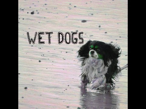 Wet Dogs (Official Music Video)...