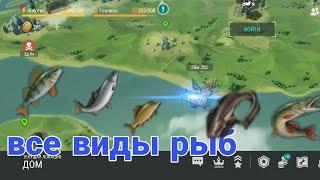 Когда ловить всех видов рыб