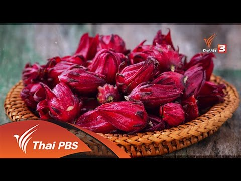 Thrombophlebitis และ plasmapheresis