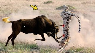 Brave Wildebeests Knock Down Herd Cheetah to Run Away | WARTHOG, ELEPHANT vs LEOPARD