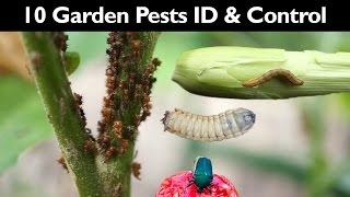 Garden Insect Control - How To Control Garden Pests Without Insecticide / Pesticide - Gardening Tips