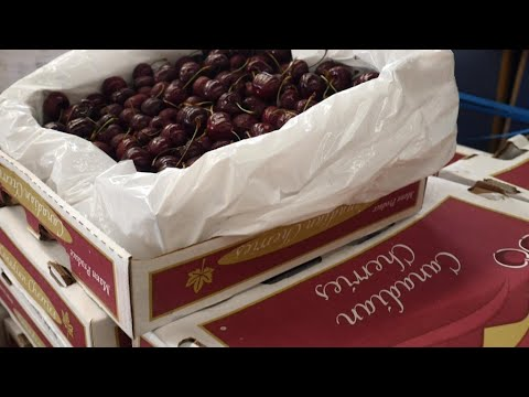 US-China trade spat weighs on cherry imports