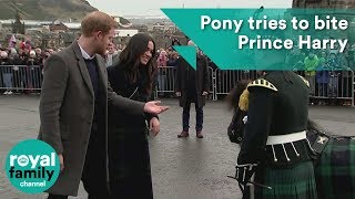 Meghan Markle laughs as pony tries to bite Prince Harry
