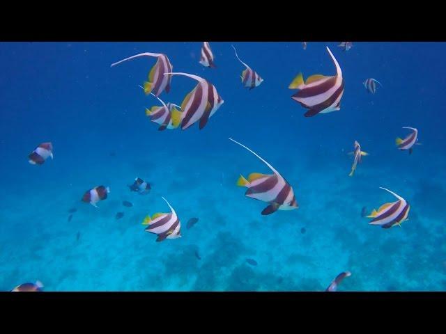 Snorkeling at Maayafushi House Reef, Maldives (HD)