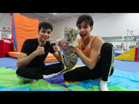 GYMNASTICS WITH A TIGER!