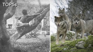 5 Incredible Stories of Feral Children Being Raised by Animals