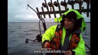 Рыбалка в карелии на лосося онега