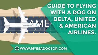 Guide to Flying with a Dog on Delta, United and American Airlines