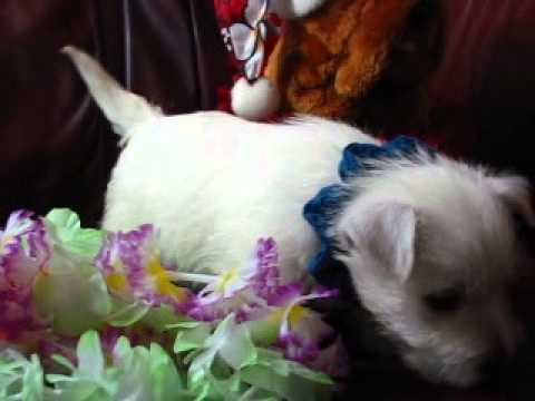 Blue Curls Boy playing with a teddy bear and lei