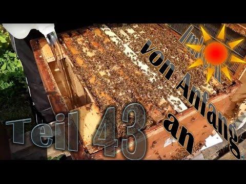 Imkern von Anfang an - Teil 43 - Bienenvolk einfüttern mit Futtertasche
