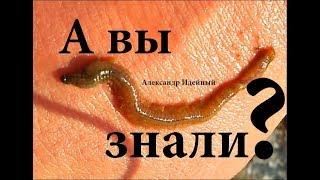 Какая рыба клюет на лиманского червя