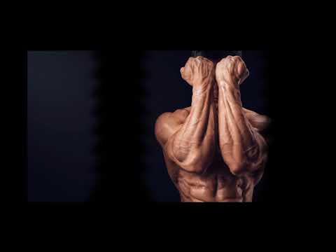 Les muscles du frein