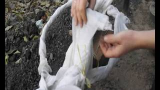 Бюджетный вариант укрытия винограда на зиму видео