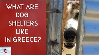 What are dog shelters like in Greece?