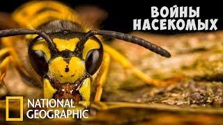 Войны насекомых (National Geographic)